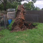 Logo of Coast Wide Stump Grinding & Tree Services