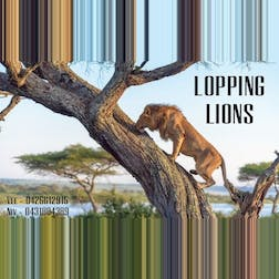 Logo of Looping Lions