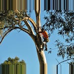 Logo of All Tree Services