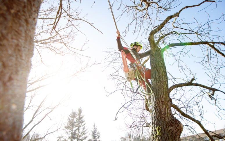Trees Need Tree Surgeons featured image