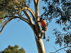 Tree Lopping in Adelaide