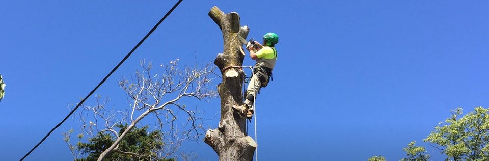 Big Os Tree Services