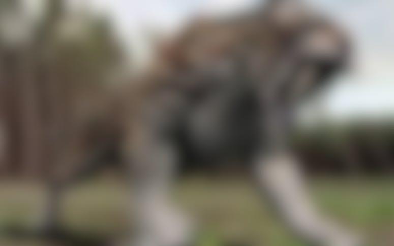 Buckshot Dozer Hire featured image